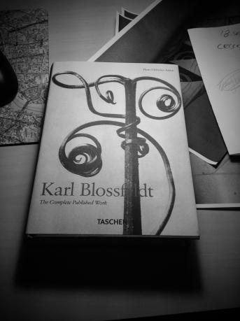 karl blossfeldt1